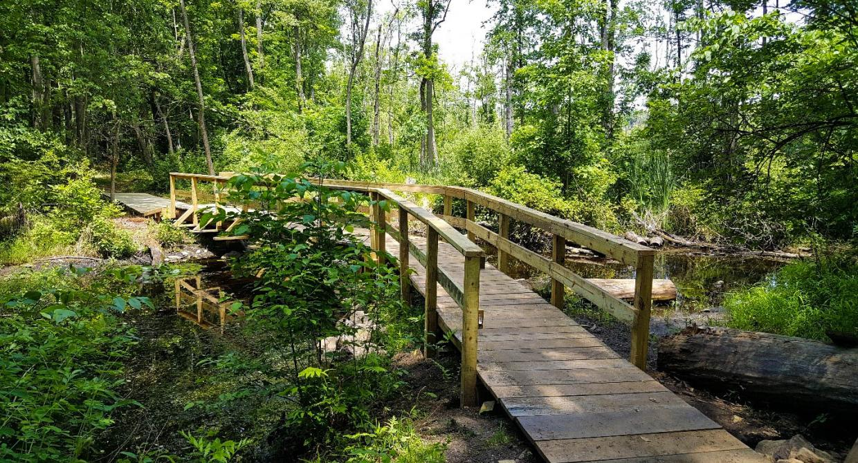 Crom Pond Trail Bridge in FDR State Park. Photo by Jane Daniels.